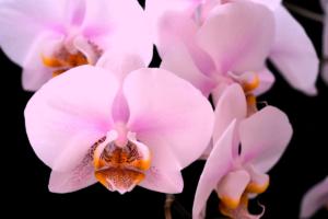 Entre orquídeas