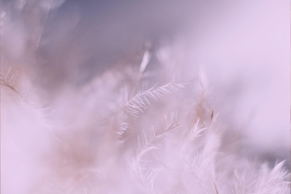 Entre plumas